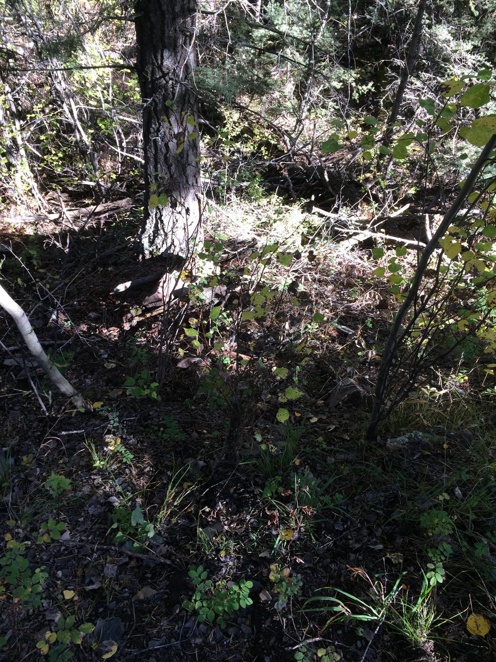 10-2-14 n.crestone trail 1-17.jpg