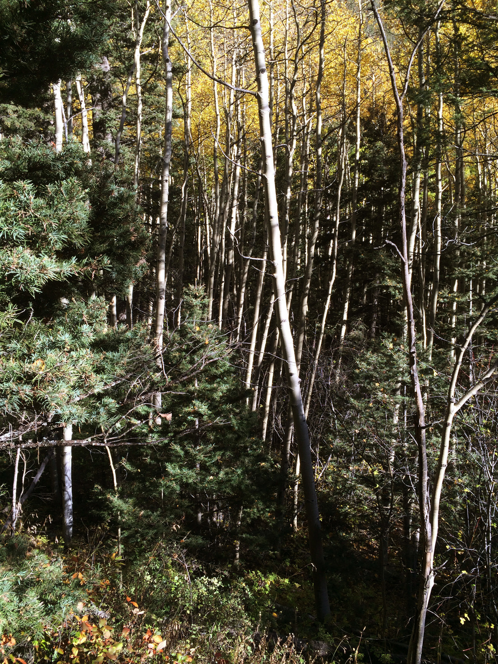 10-2-14 n.crestone trail 1-17-3.jpg