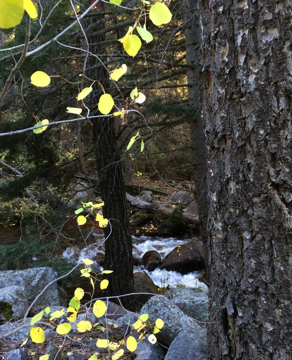 10-2-14 n.crestone trail 1-17-16.jpg