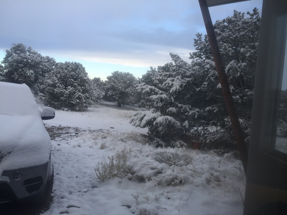looking south out our front door towards my studio this morning