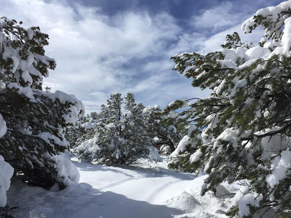 site-5-9-15Big Snow 18.jpg