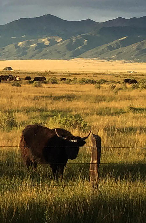 site-9-1-15 moffat yaks.jpg