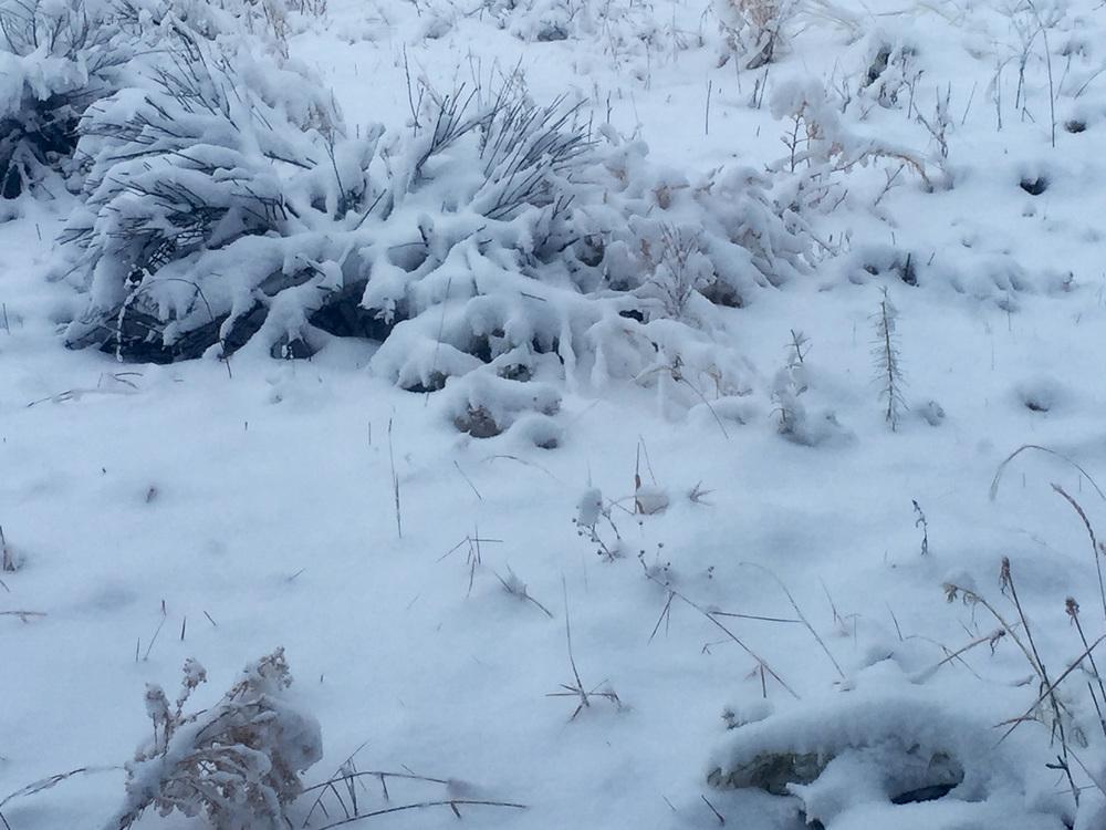 12-12-15 snow.jpg