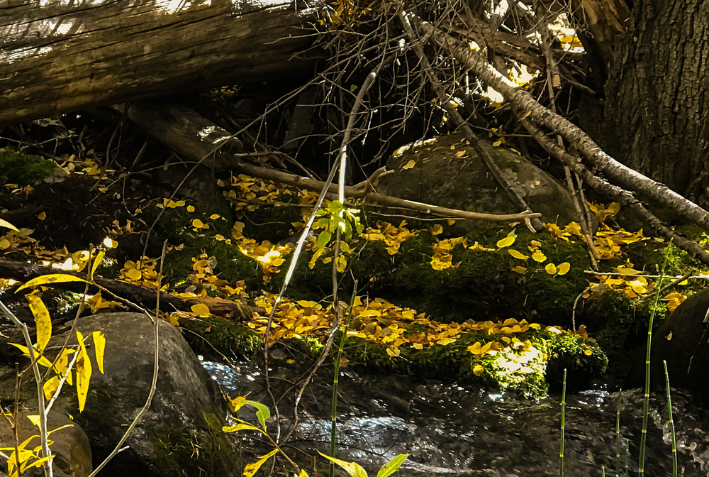 SITE- creek site 1.jpg