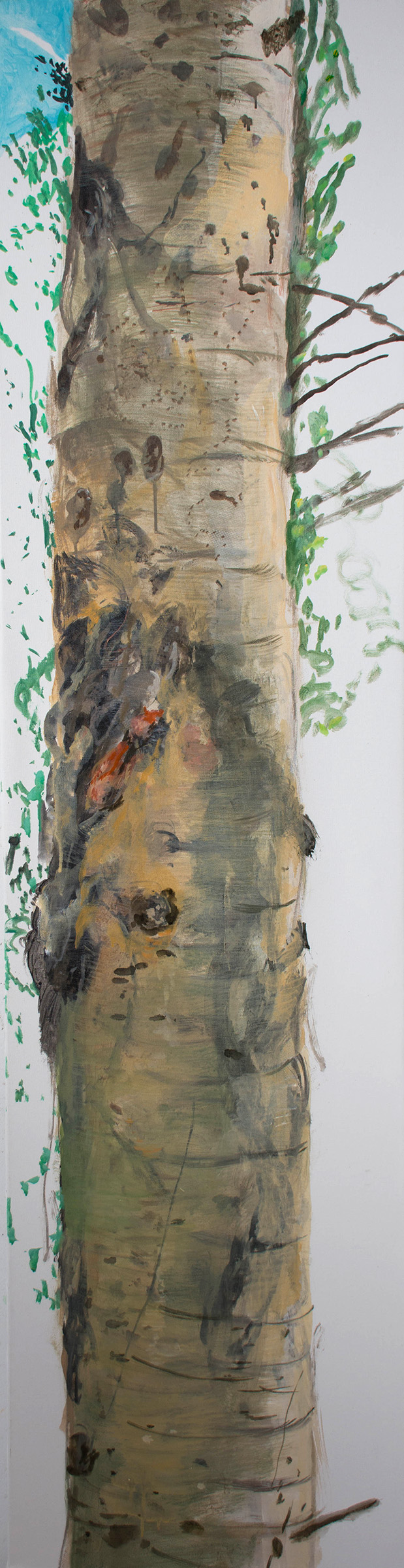 SITE-10-31-17 tree 2 4-30.jpg