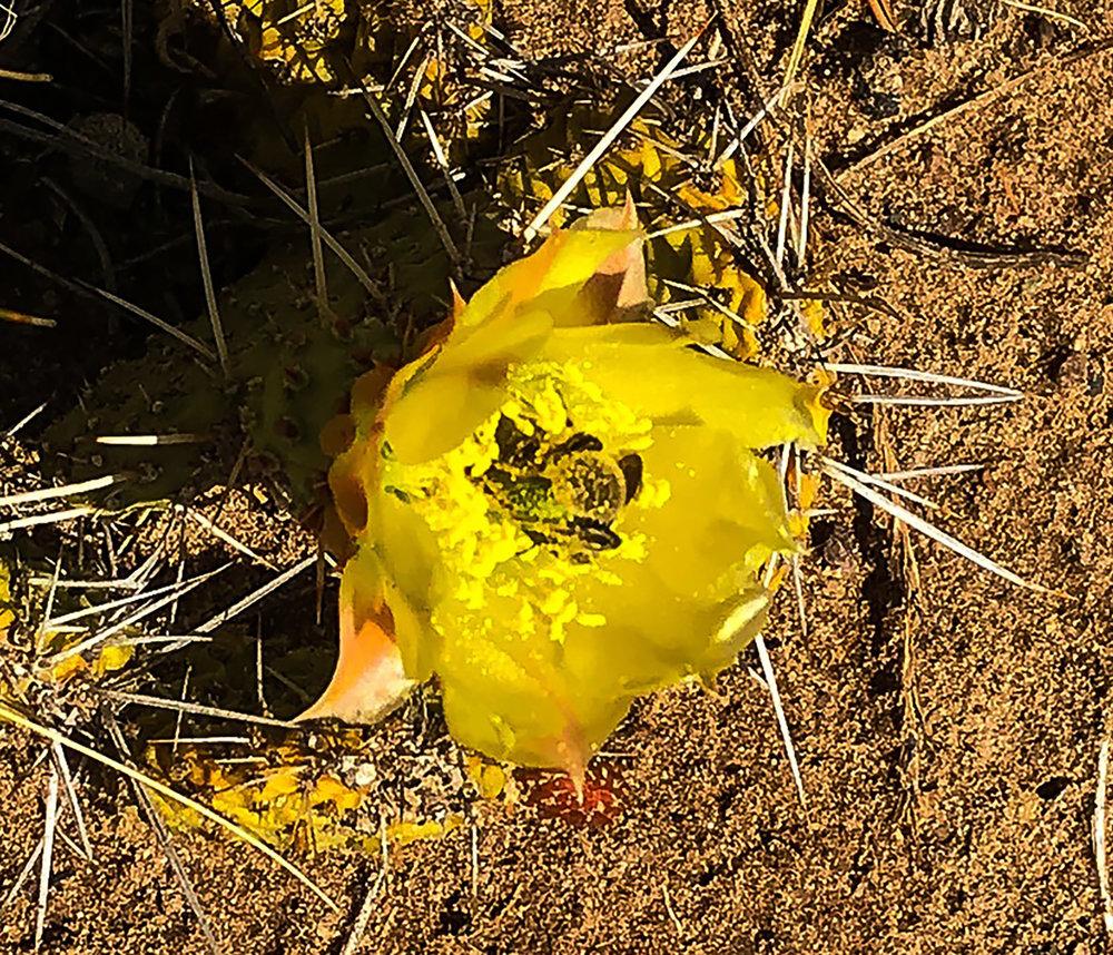 SITE-6-4-18 cacti 1-CROP.jpg