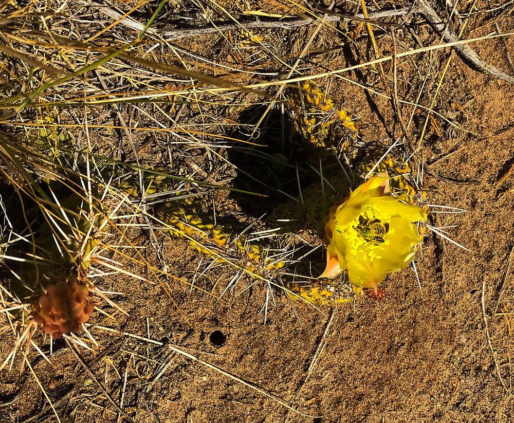 SITE-6-4-18 cacti 1.jpg