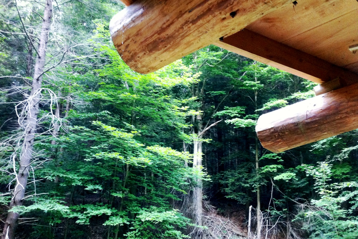 Somewhere up where PA meets NY, Tim Denial's hand-made log cabin, July 2011
