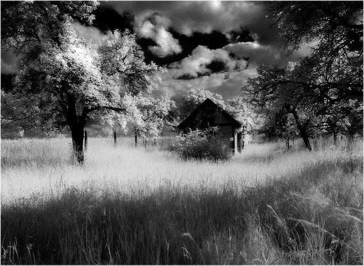 """Black-and-White Photo Made With Infrared Photography."" Photograph by Reinhard Brunsch. Via Wikimedia Commons."
