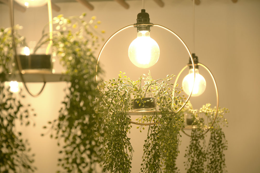 aeon-illumination-hanging-garden-circle-pendant.jpg