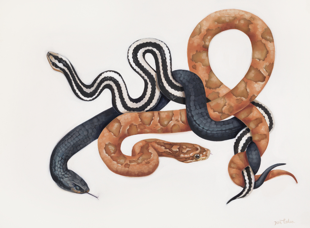 'Snakes'