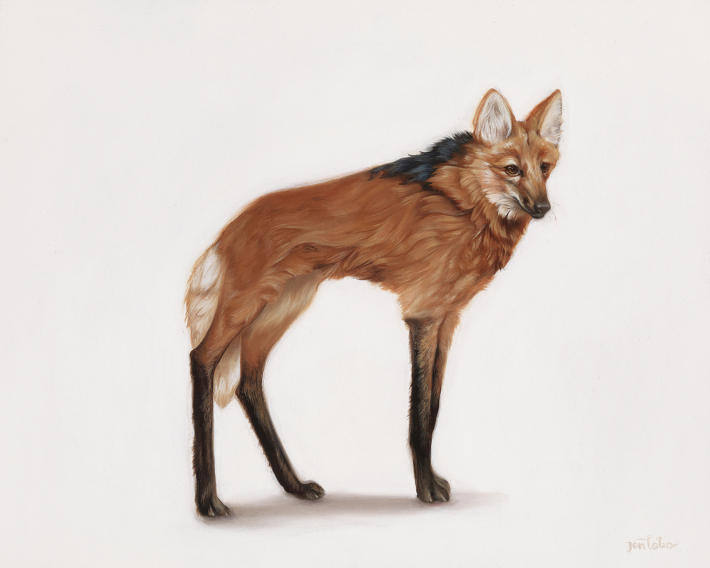 'Maned Wolf'