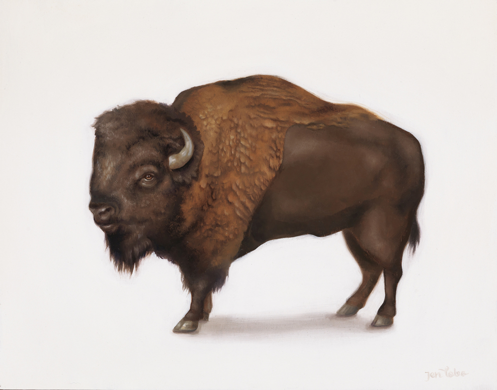 'American Bison'