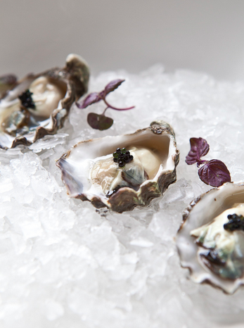 The New York Times — The New Wave of Oyster Bars