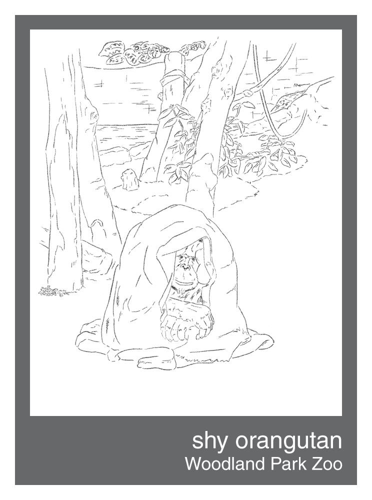 shy-orangutan.png