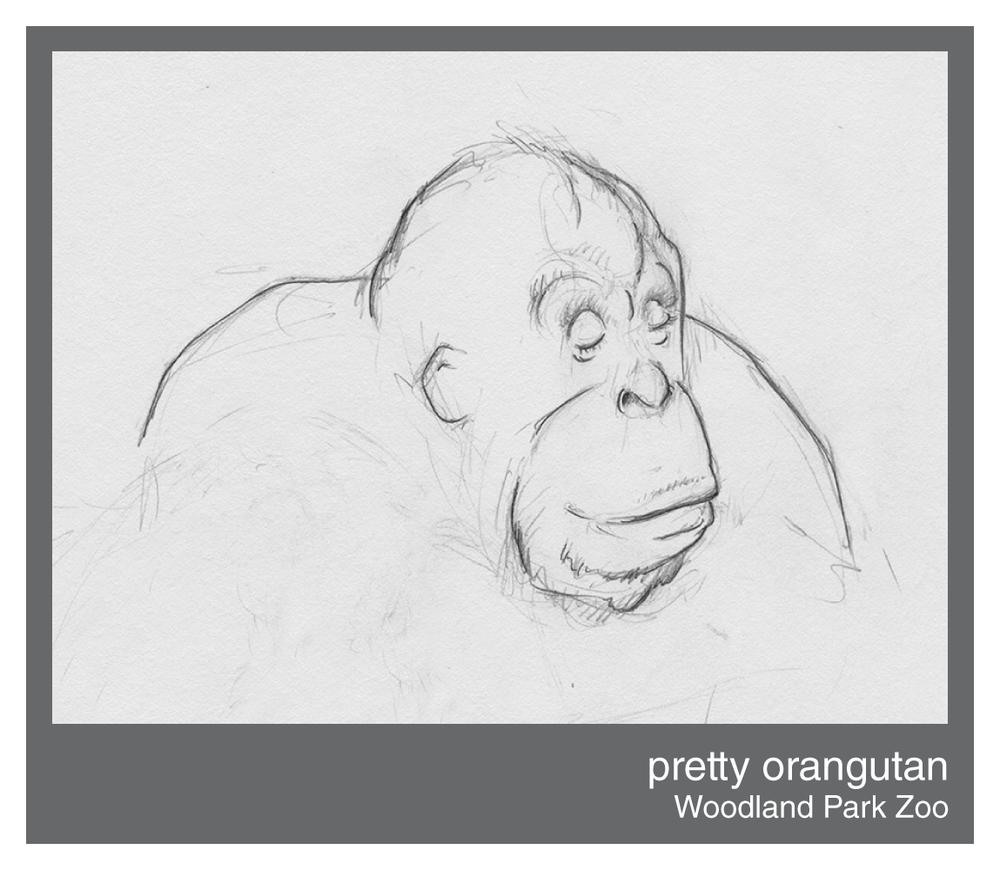 pretty-orangutan.png