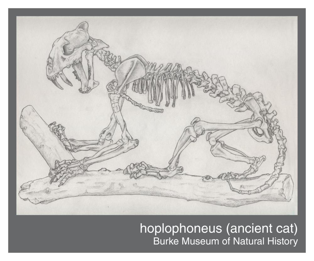 hoplophoneus--150ppi.png