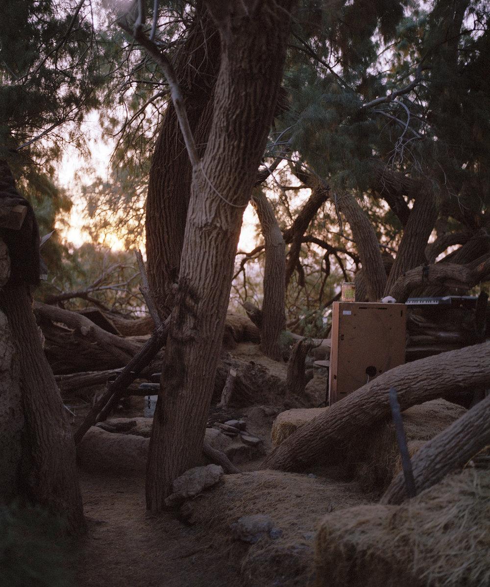 4Temple_Wilderness_Gooney_Forest.jpg
