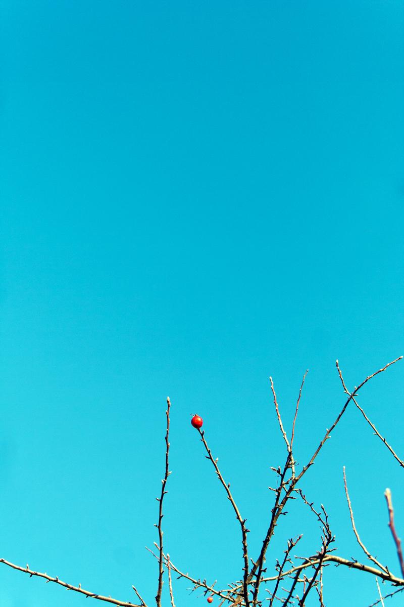2012_Dec18_1.jpg