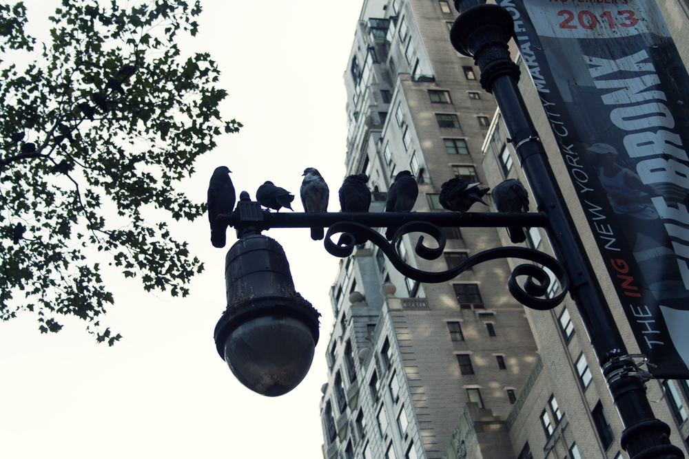 NYC_2013-33.jpg