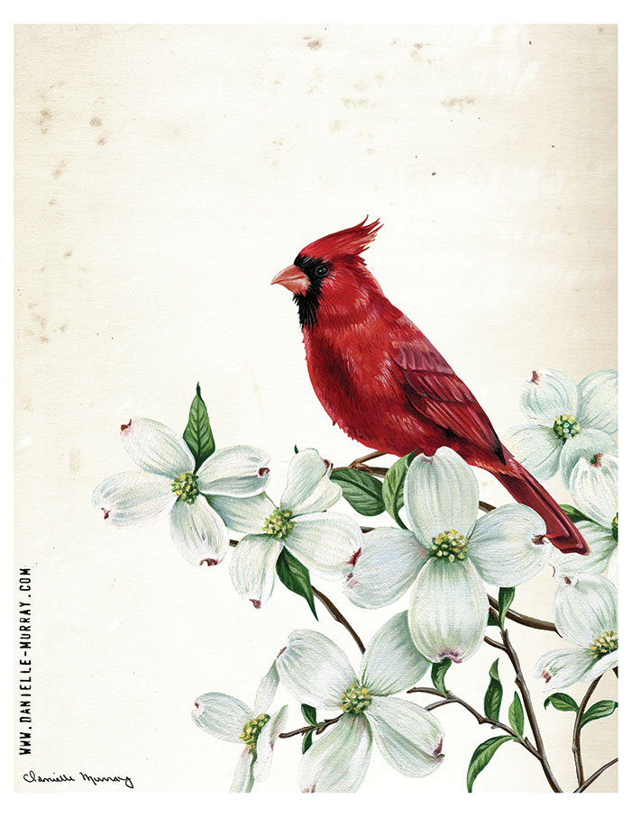 Danielle Murray, Cardinal Botanical 2