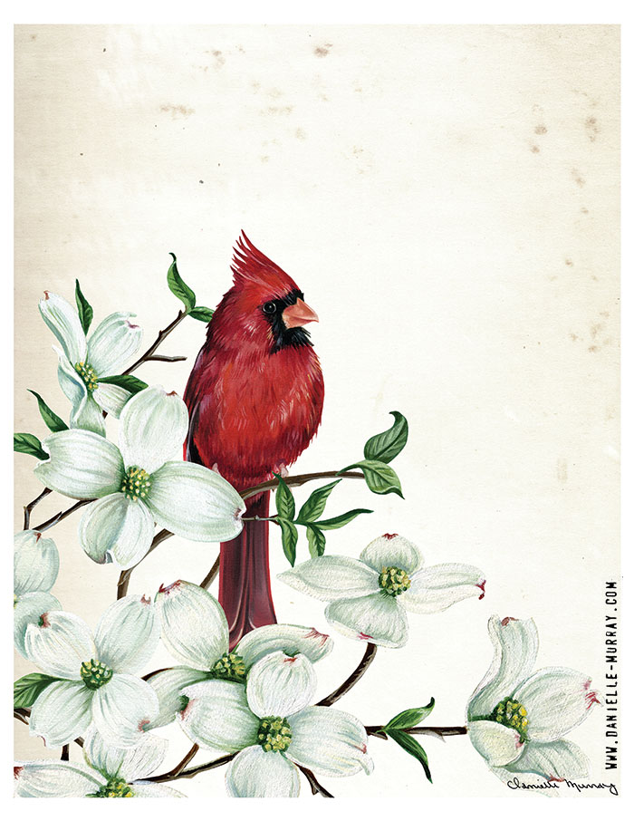 Danielle Murray, Cardinal Botanical 1