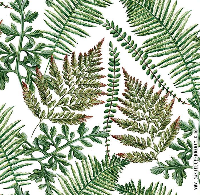 Danielle Murray, Allover Ferns