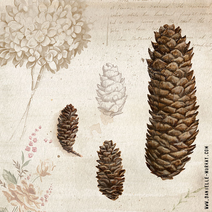 Danielle Murray, Elements of Fall, Pinecones
