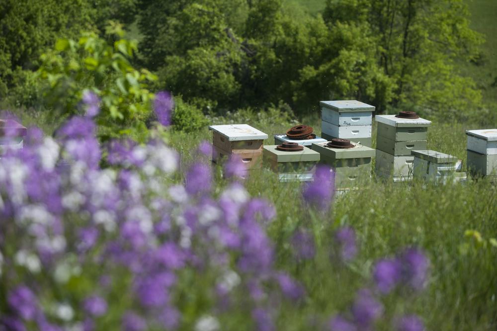 beekeeper-stephen-repasky-0326.jpg