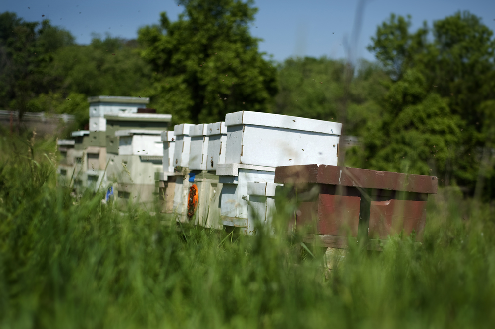 Some of the mating nucs for queens and production hives of Meadow Sweet Apiaries