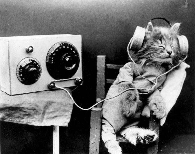 listen - kitten.jpg