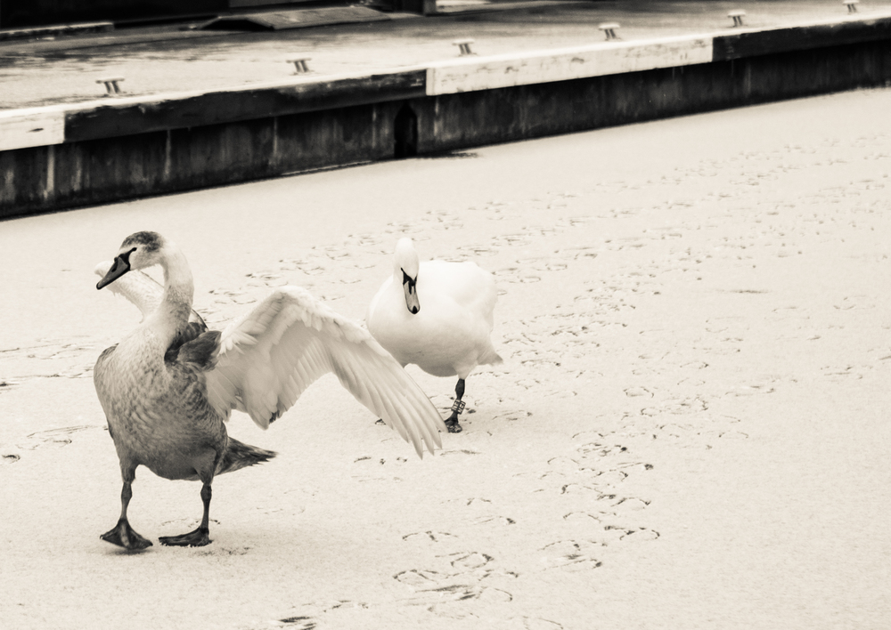 snowy commute-1.jpg