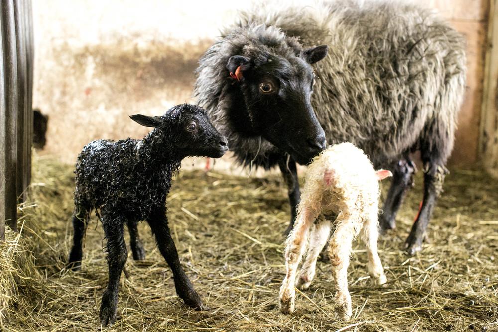 goat farm-1.jpg