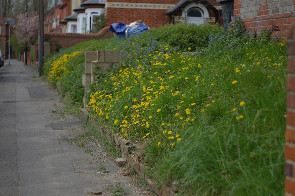 The weeds at the end of my street bordered by lovely old brick houses