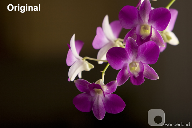 Orchid Original web.jpg