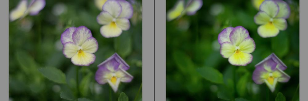 Adobe Lightroom Presets03.jpg