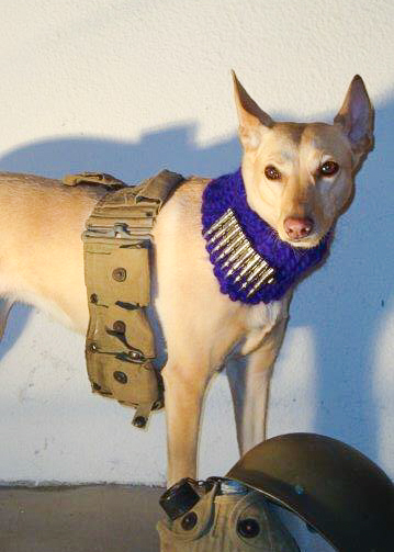maru-war-dog_photo-op.jpg