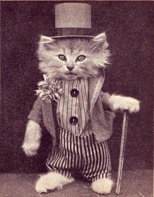 richcatswitchkats.jpg