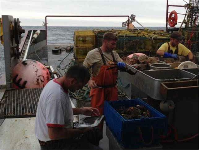 Sampling lobsters on the F/V Gladys Elaine