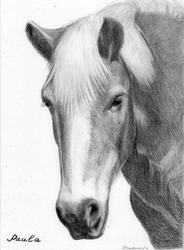 Bleistiftzeichnung_Kohlezeichnung_Pferd_nach_Vorlage.jpg