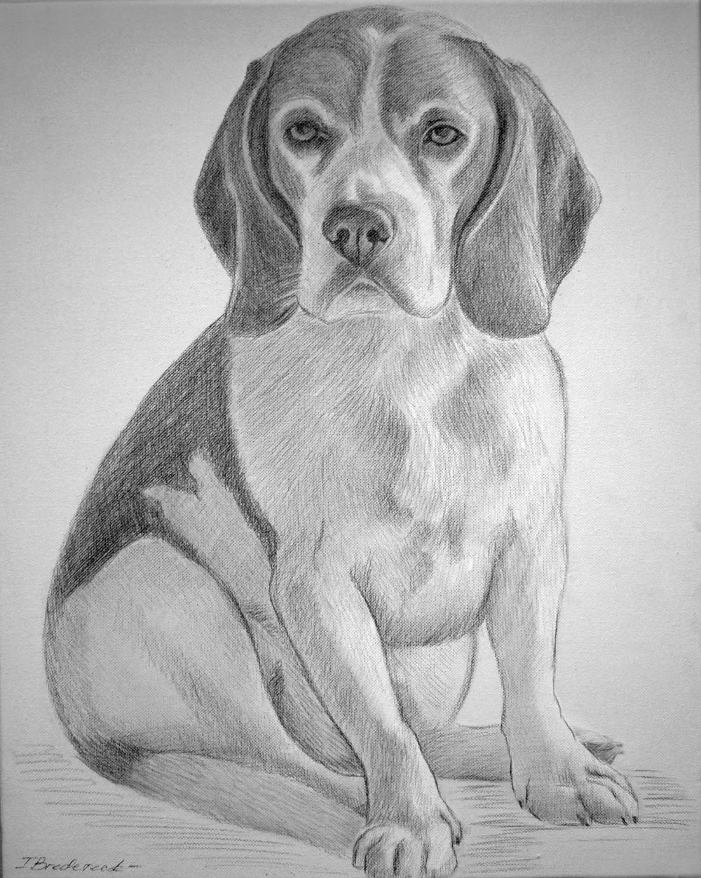 hund_zeichnung_2.jpg