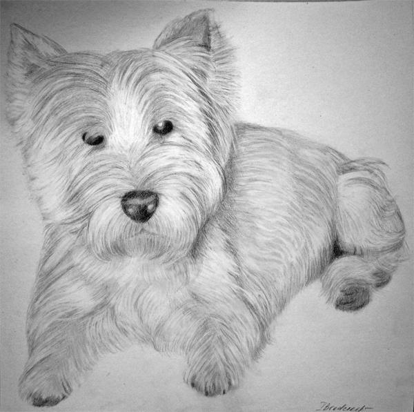 Kohlezeichnung_40x40_Hund_zeichnung_vom_foto.jpg