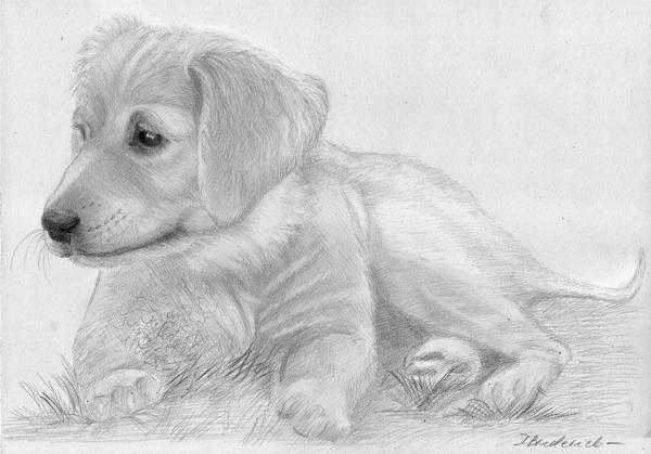 Bleistiftzeichnung_Hund_bleistift_portrait.jpg
