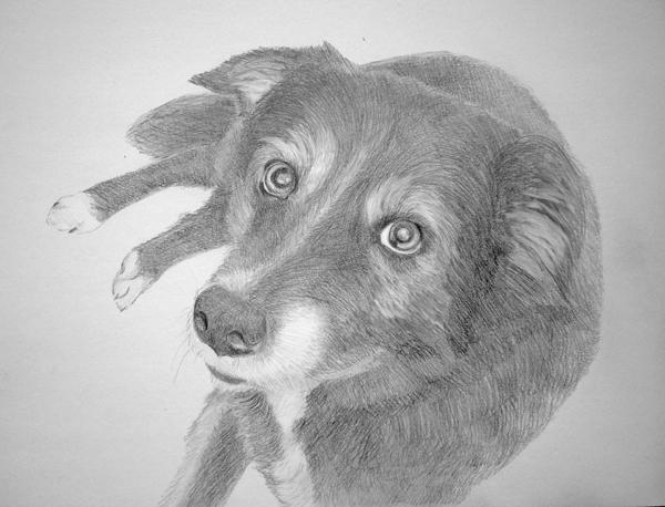 Bleistiftzeichnung_hundeportraits.jpg