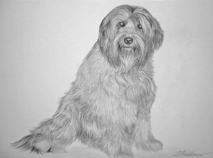 dog_pencil_drawing_from_photo.jpg