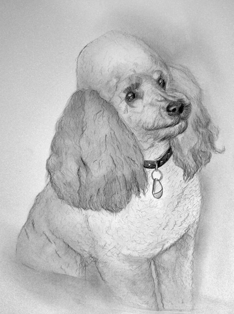 dog_pudel_pencil_portrait.jpg
