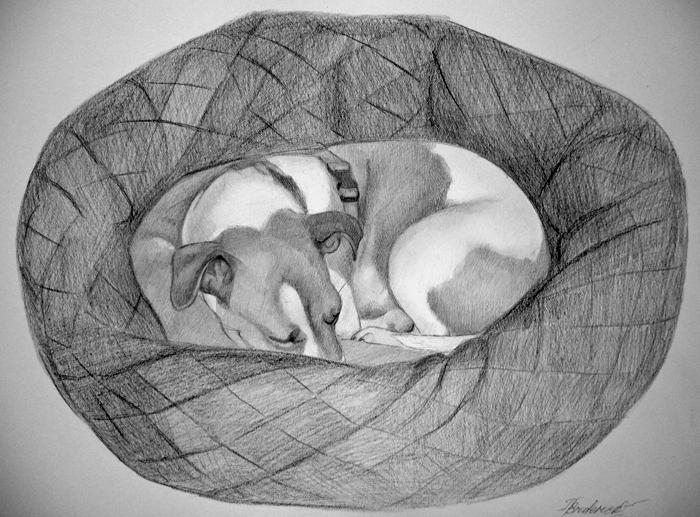 Hund_Zeichnung_vom_Foto_Bleistiftzeichnung.jpg