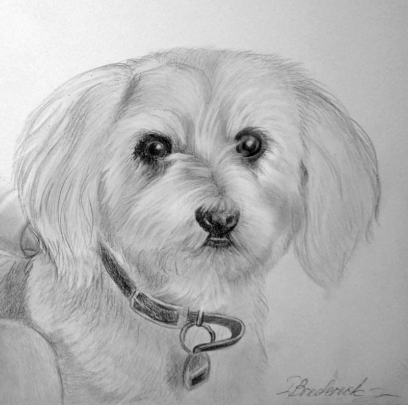 kleine_hund_portrait_zeichnung.jpg