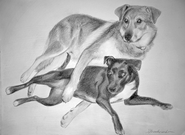 Portrait_hunde_zeichnung.jpg