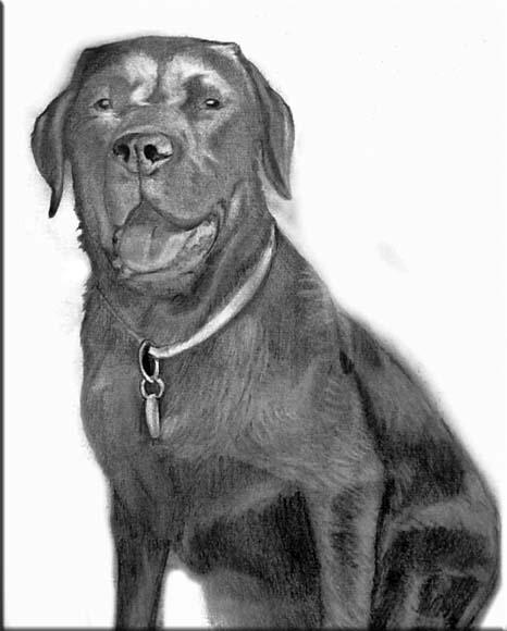 Schwarze_Labrador_Hund_Zeichnung.jpg